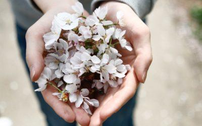 Agradecimiento diario: El camino hacia la abundancia